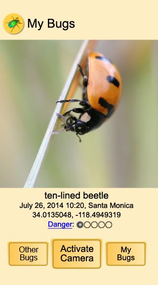 MyBugs Lady Beetle