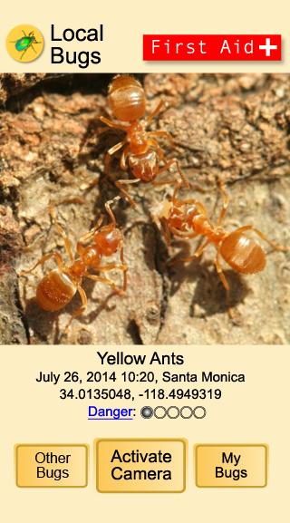 MyBugs Yellow Ants
