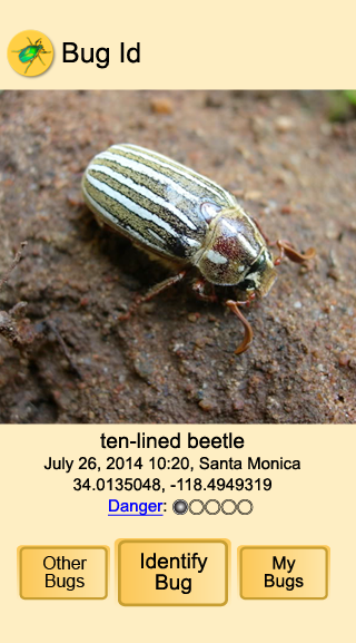 Ten-Lined Beetle